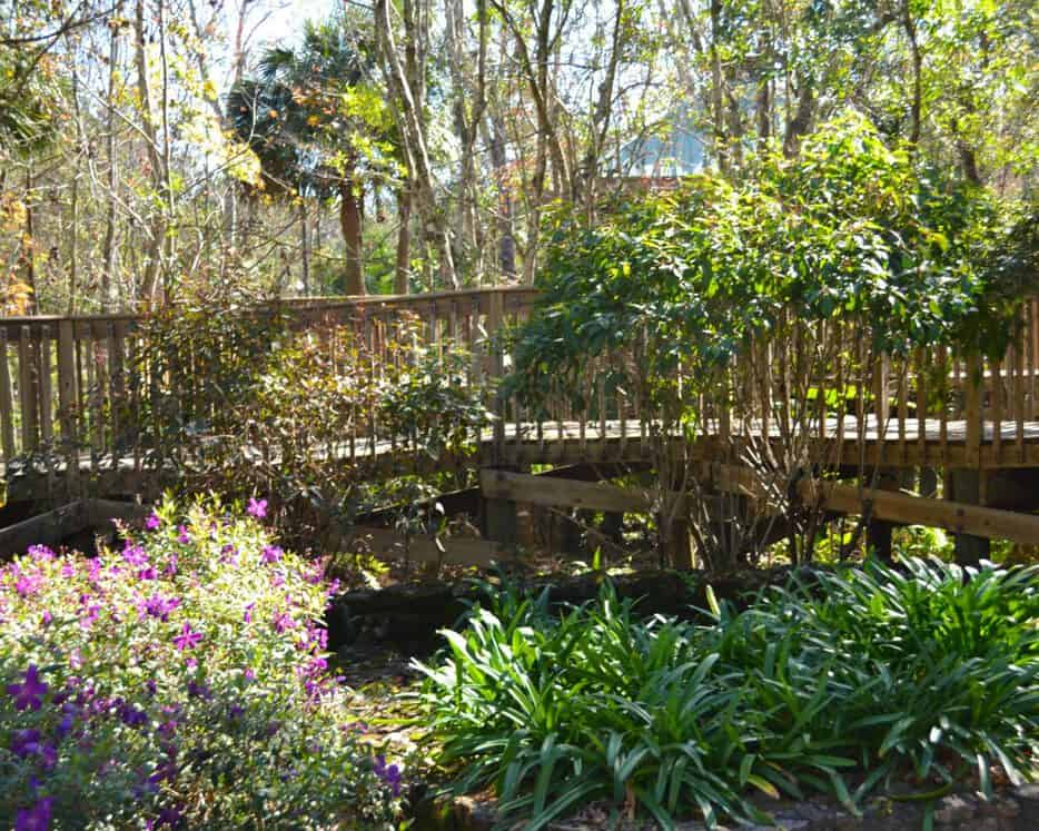 Your Guide to Thornton Park — Momlando